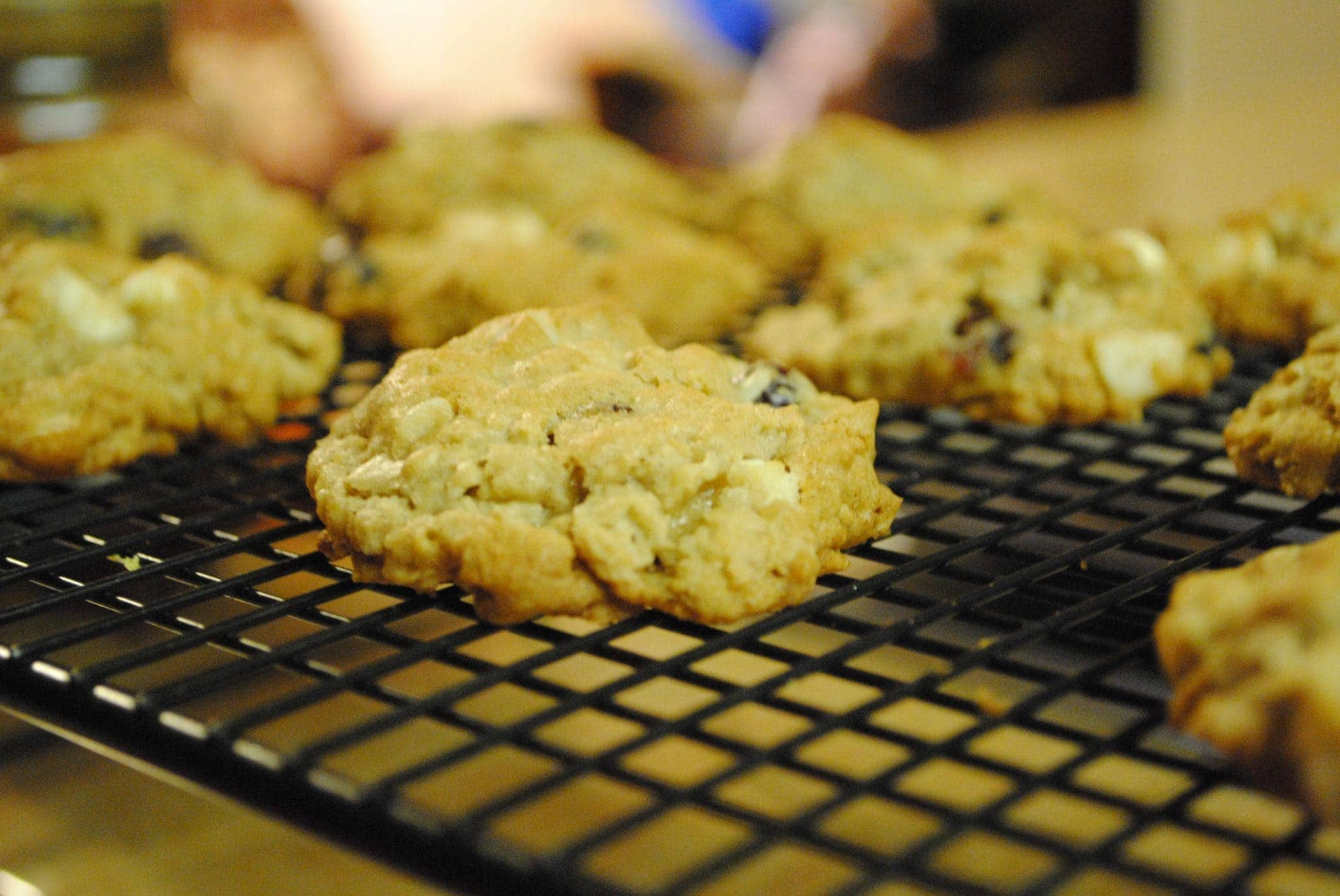 Jungle Cookies (Cranraisin Macademia Nut White Chocolate Chip Oatmeal Cookies)