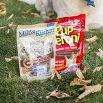 Helping Aspen celebrate Halloween with Halloween Treats